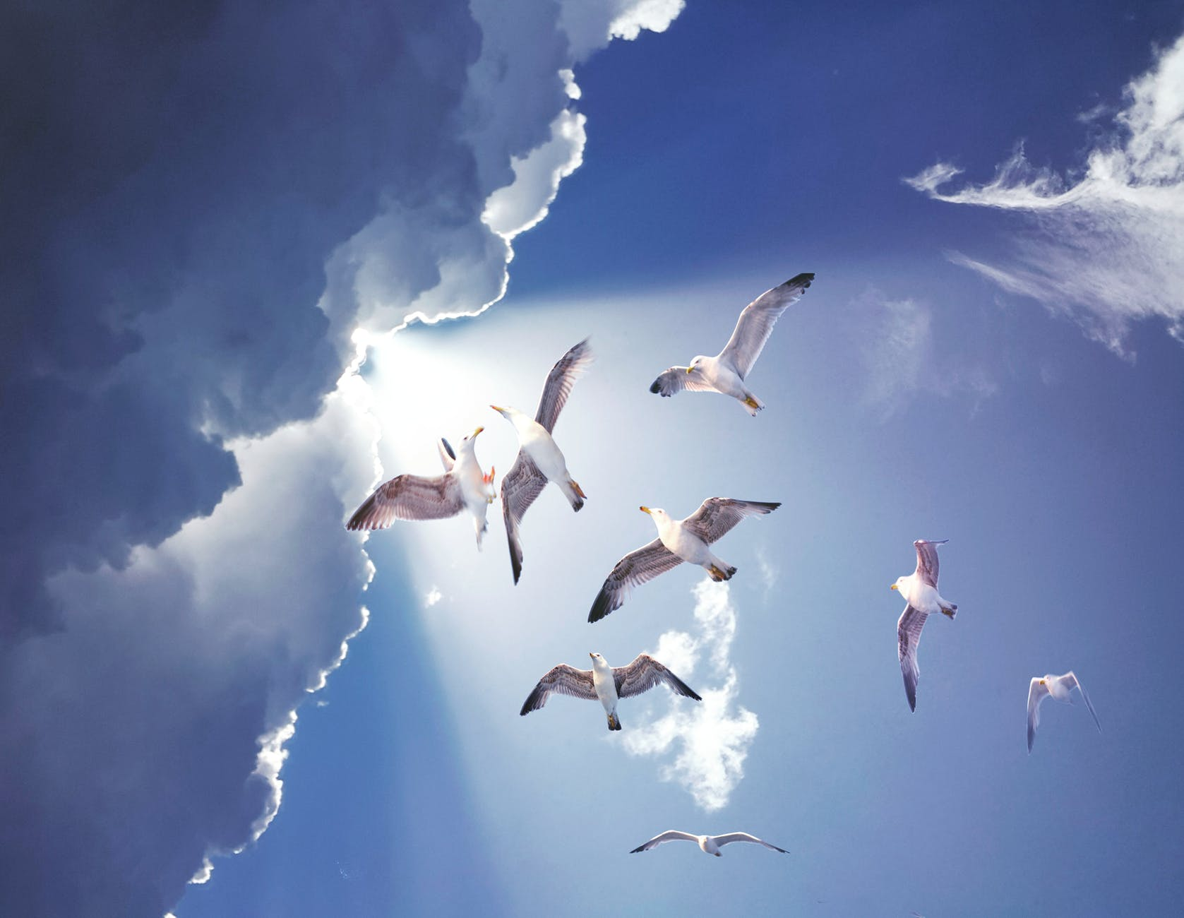 white birds flying