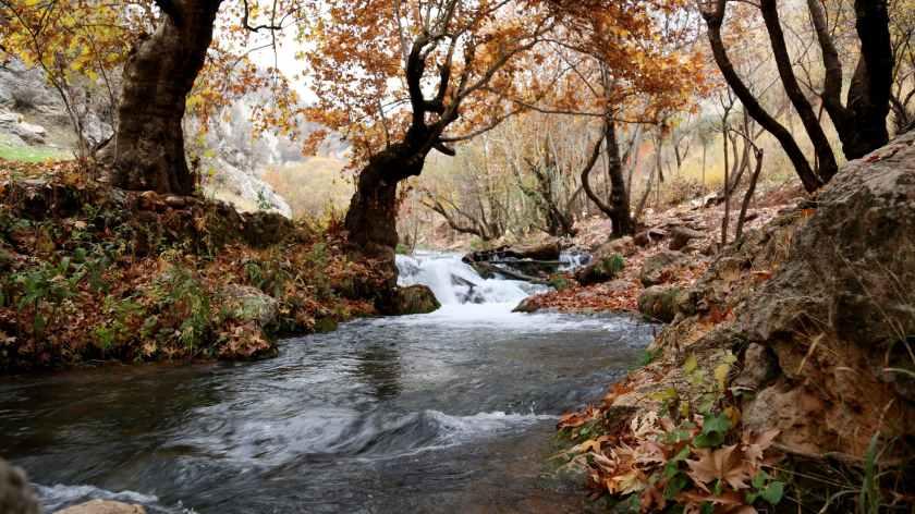 river inside forest near brown leaf trees