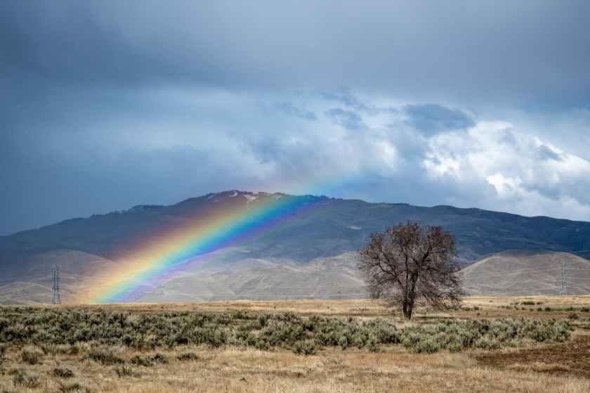 rainbow over grass field